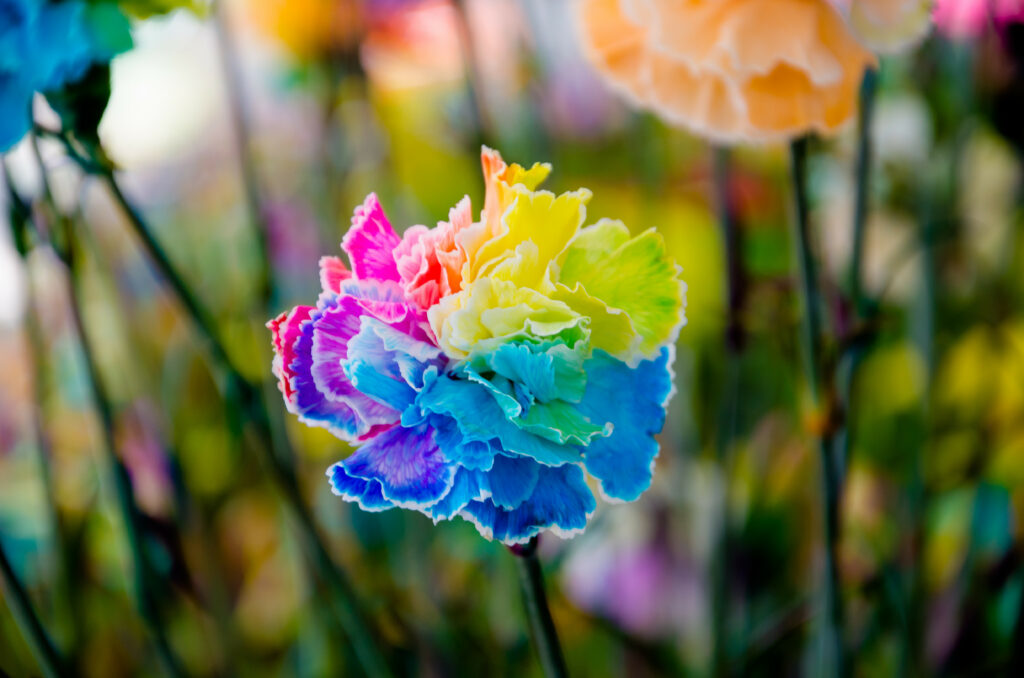 Add Color to Flowers Using Science